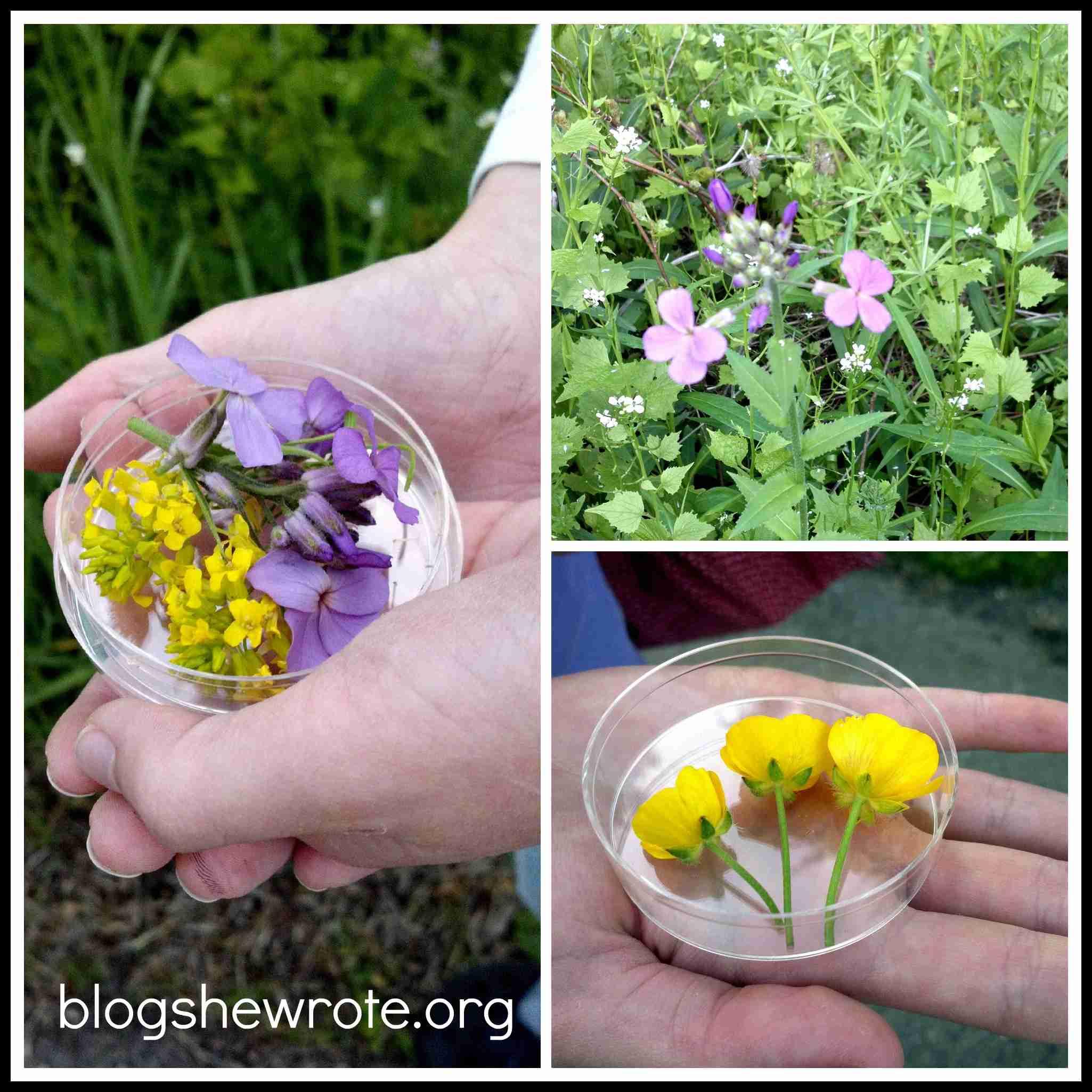 Blog She Wrote: Flower Pressing