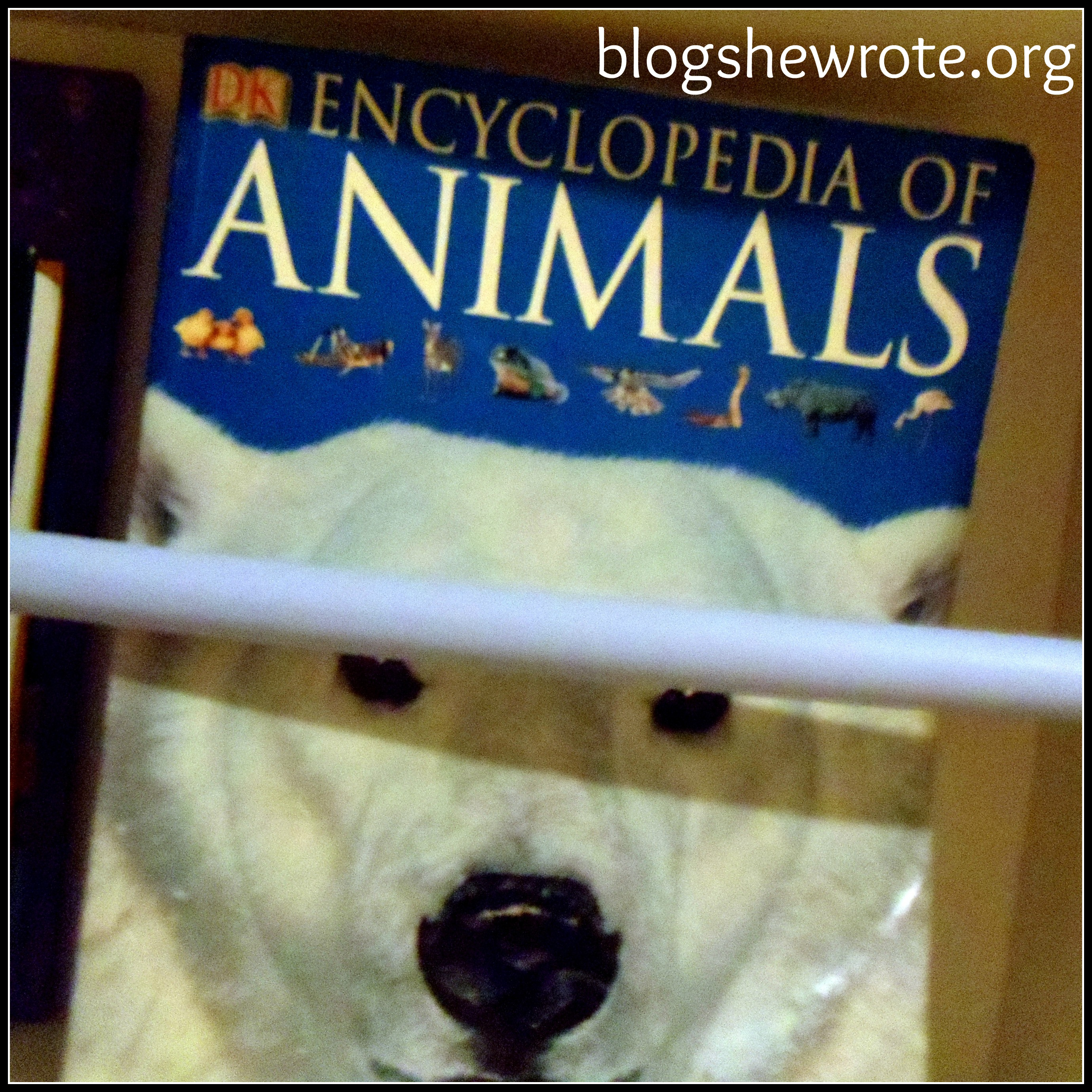 Blog She Wrote: Top Ten Science & Nature Books