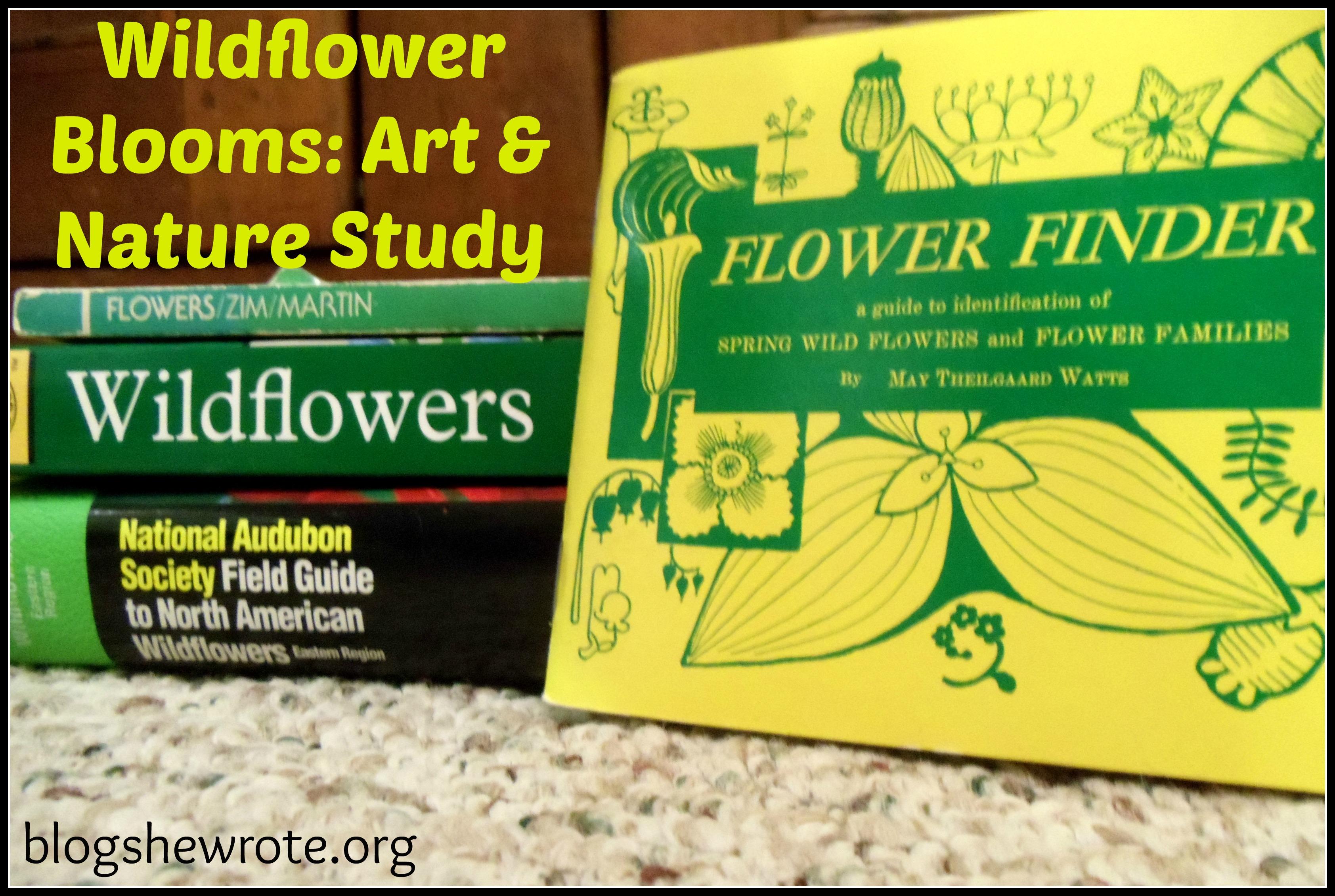 Blog She Wrote: Wildflower Art & Nature Study