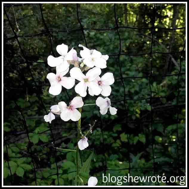 Blog She Wrote: Wildflowers Art & Nature Study