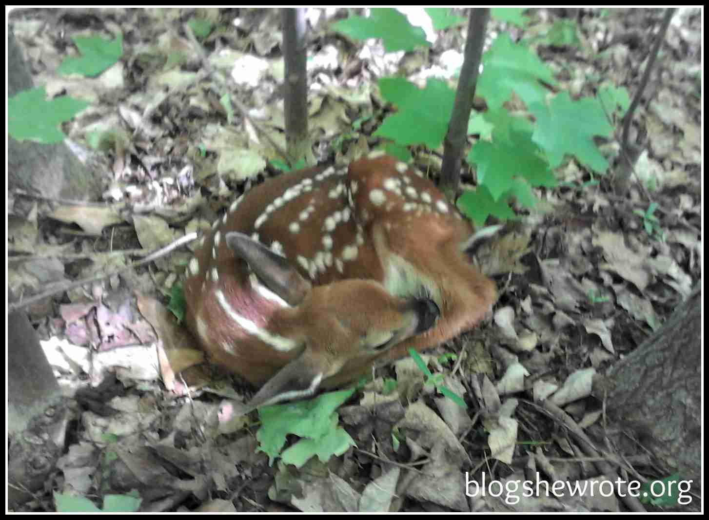 Blog She Wrote: Implementing a Nature Study- Watch Your Own Backyard