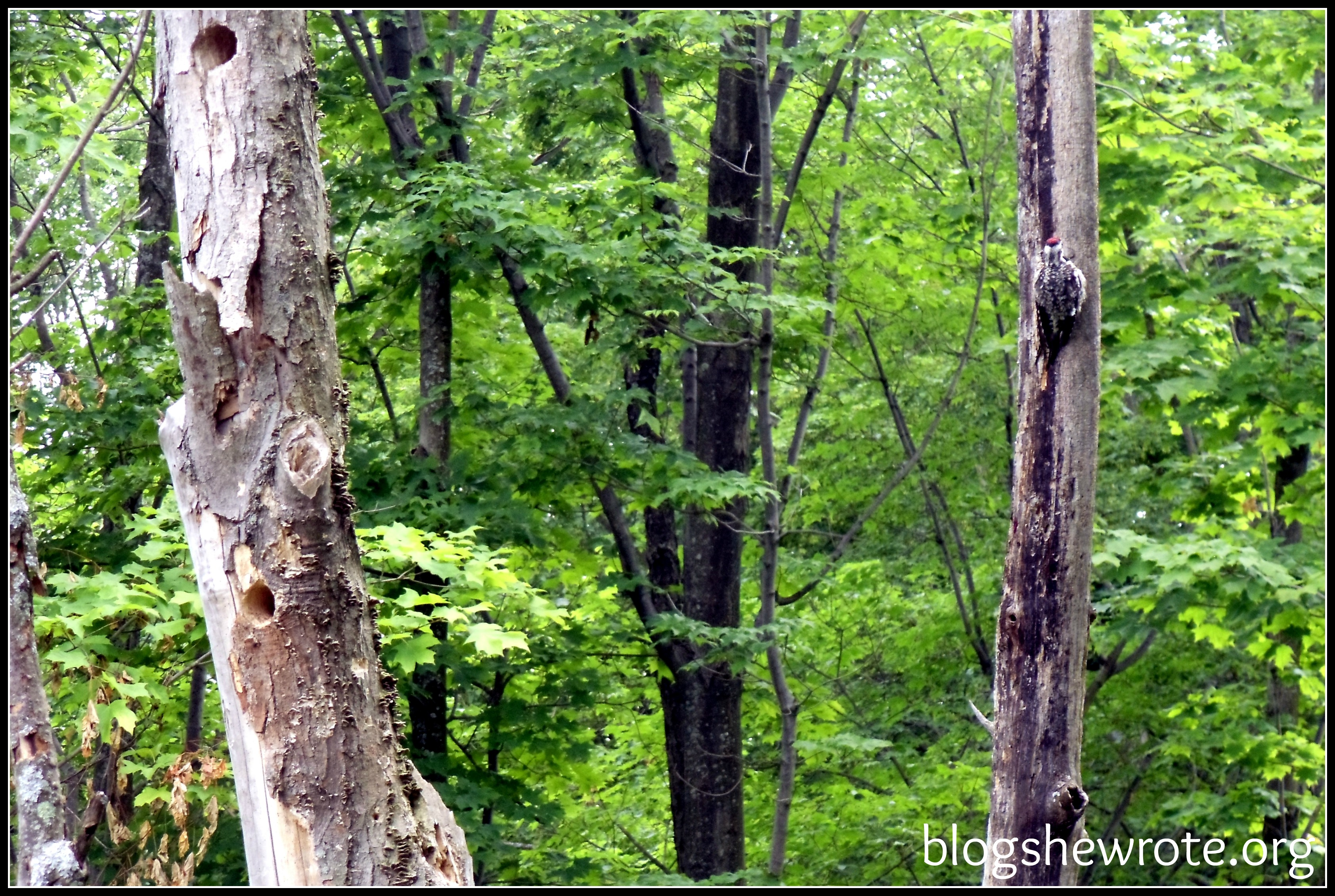 Blog She Wrote: Implementing a Nature Study -  Watch Your Own Backyard
