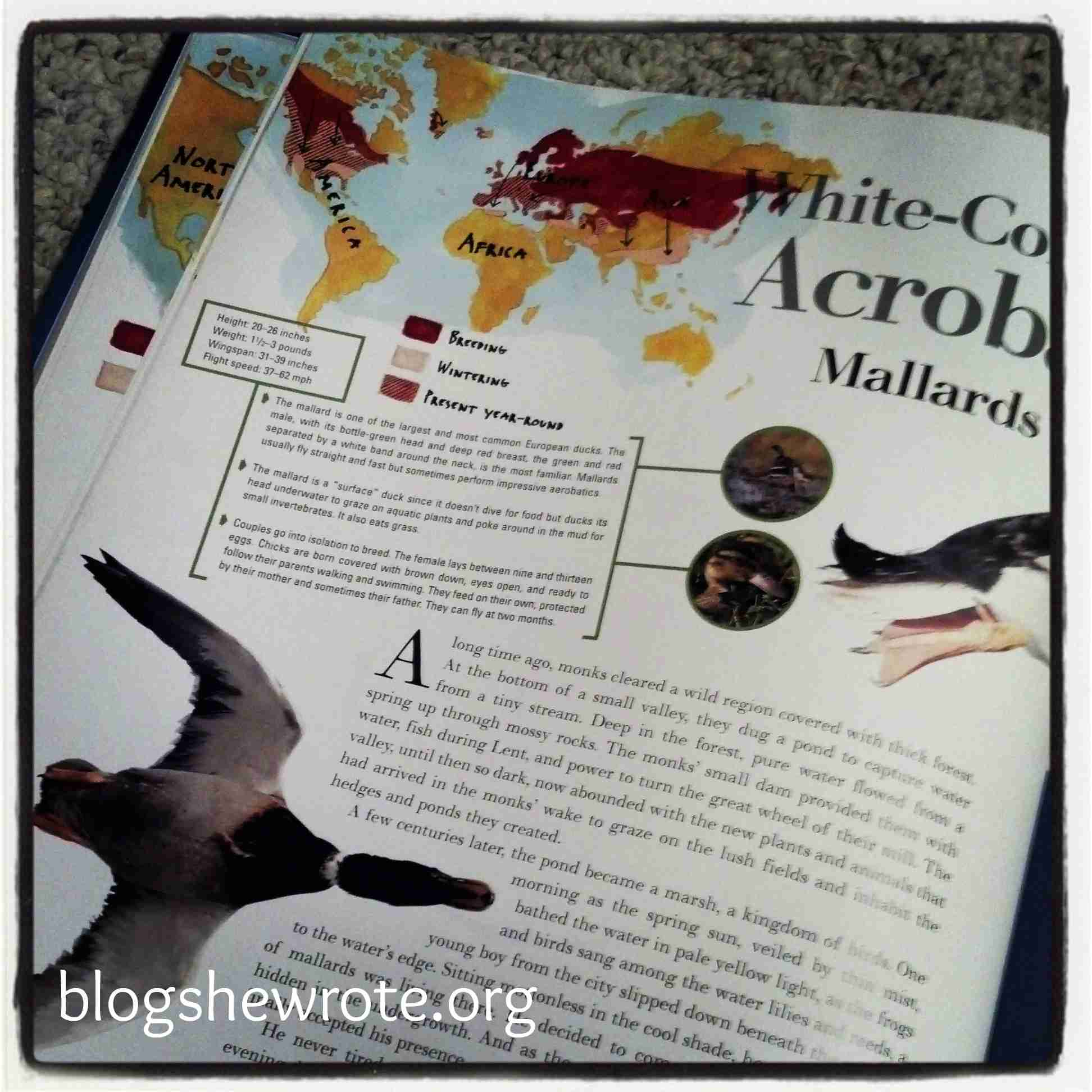 Blog, She Wrote: Geography Quest- Bird Migration