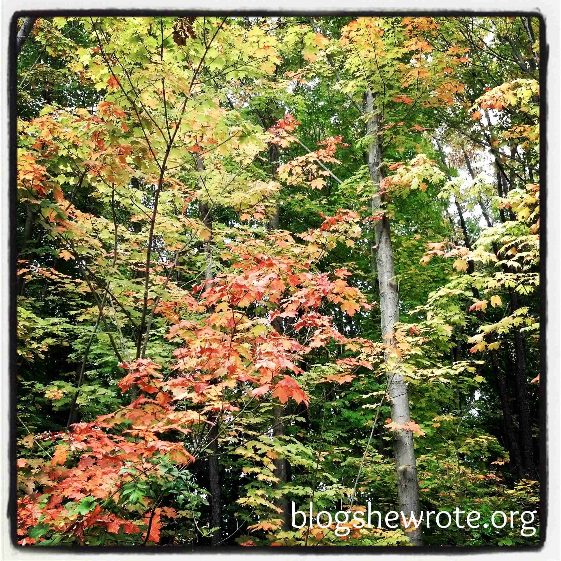 5 Ways to Have Fun with Falling Leaves
