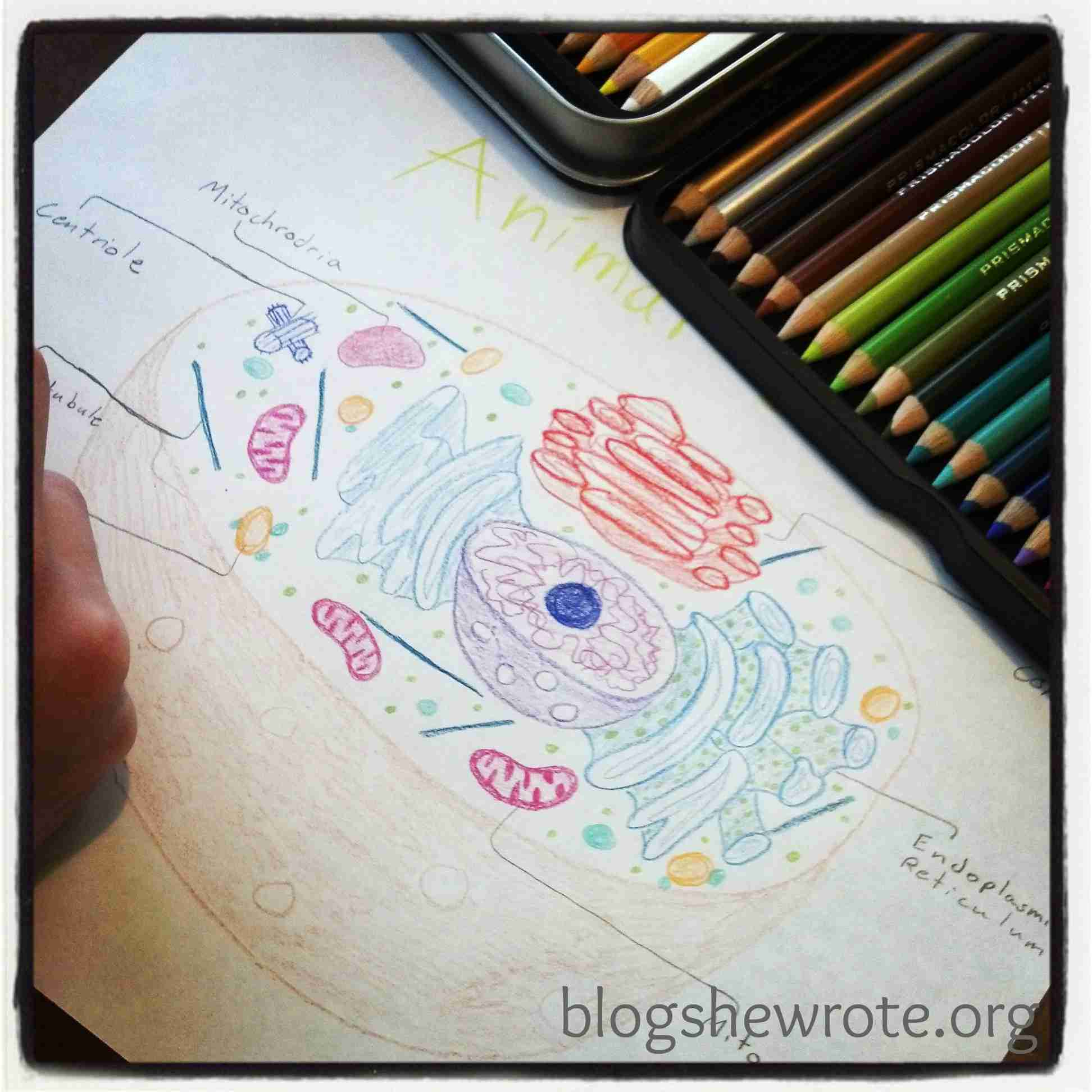 Blog, She Wrote: Homeschooling Middle & High School Science