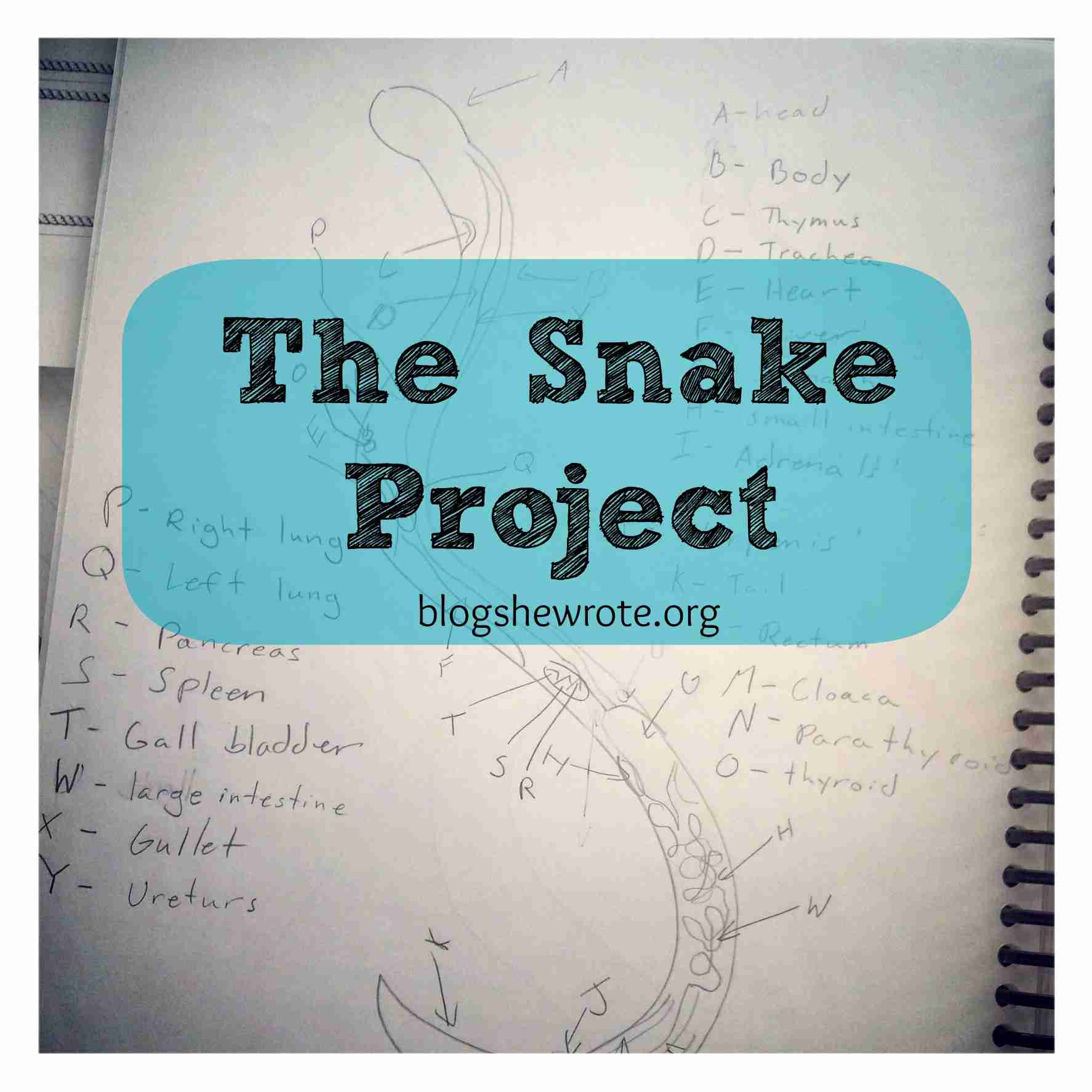 Blog, She Wrote: The Snake Project