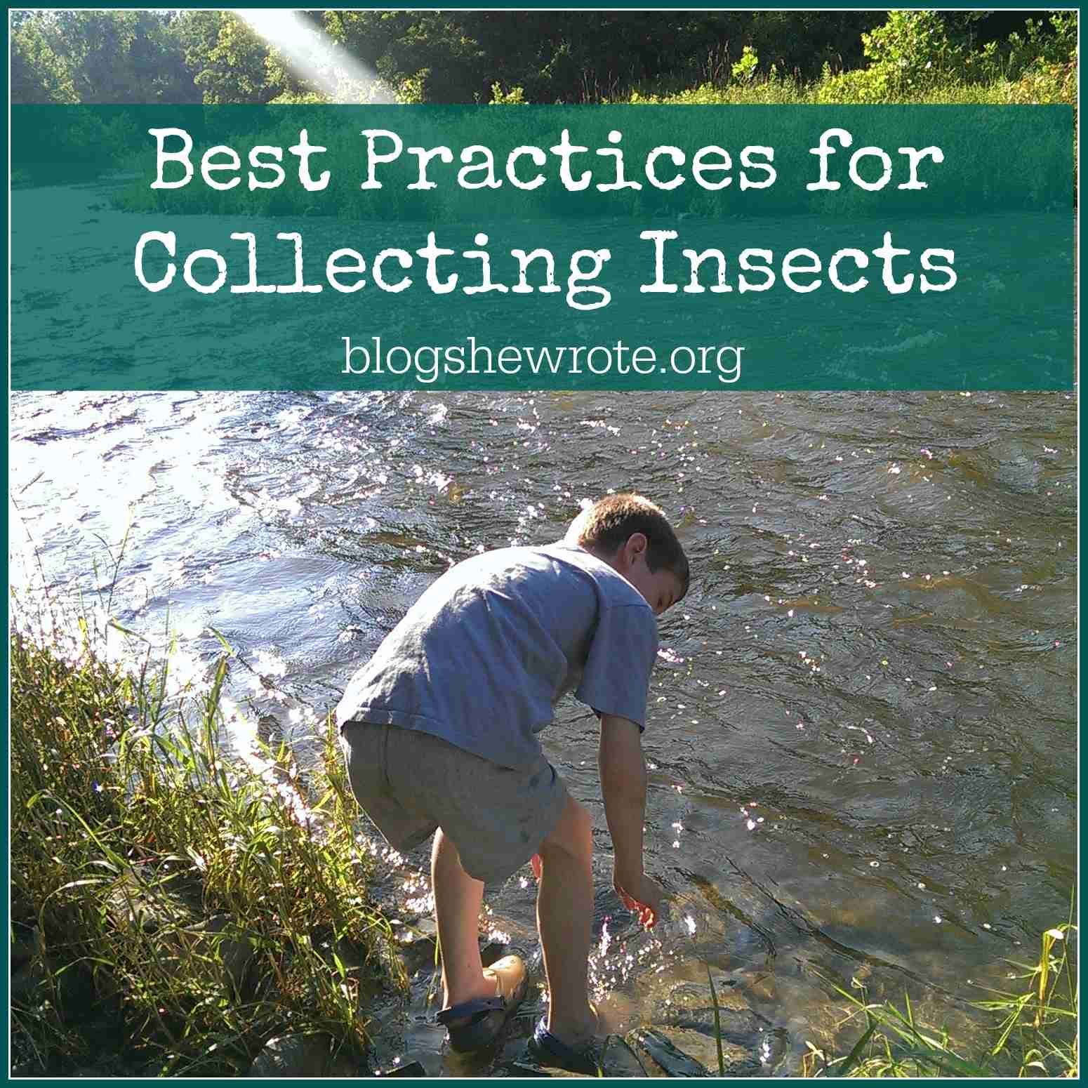 Blog, She Wrote: Best Practices for Collecting Insects