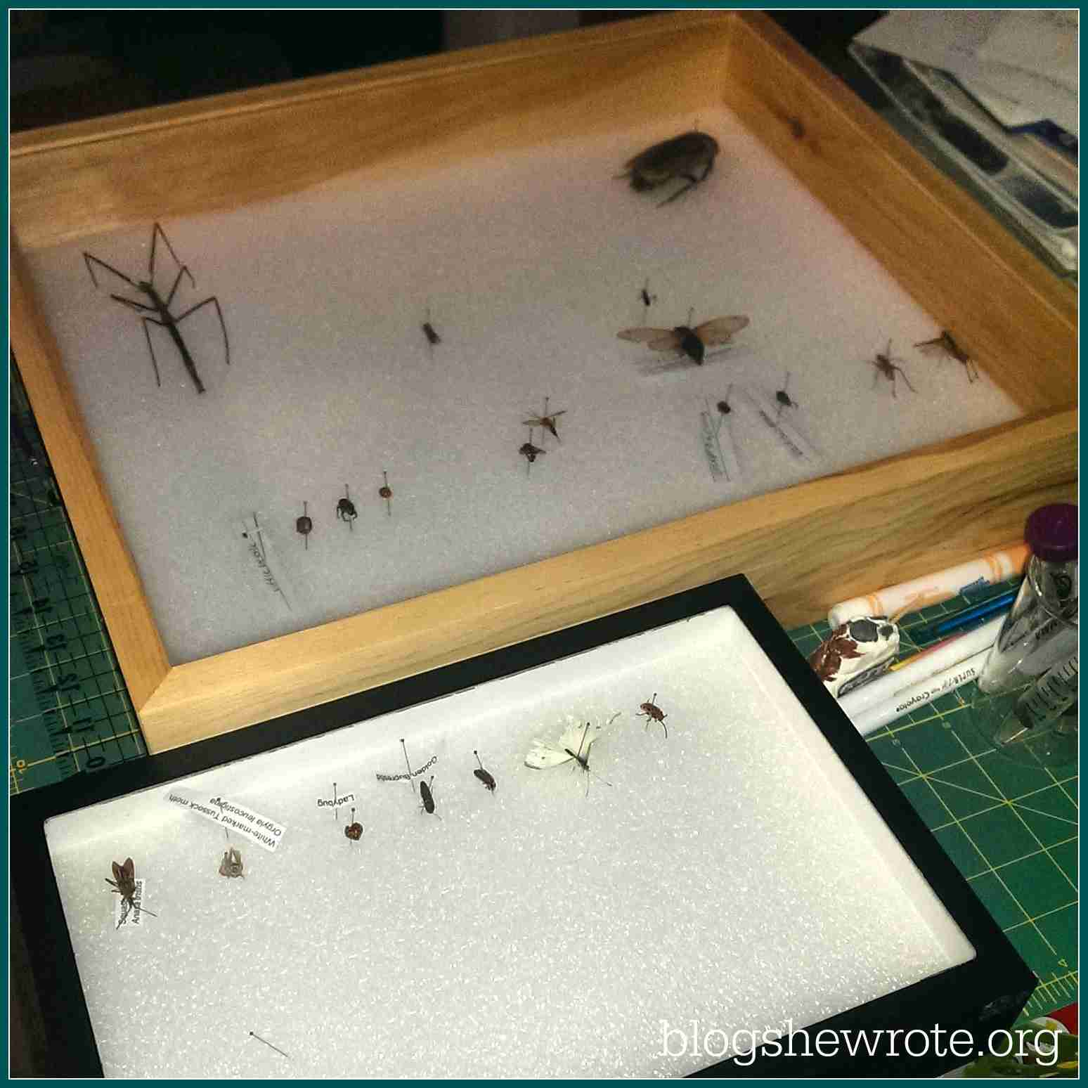 Blog, She Wrote: Must Have Equipment for Entomology
