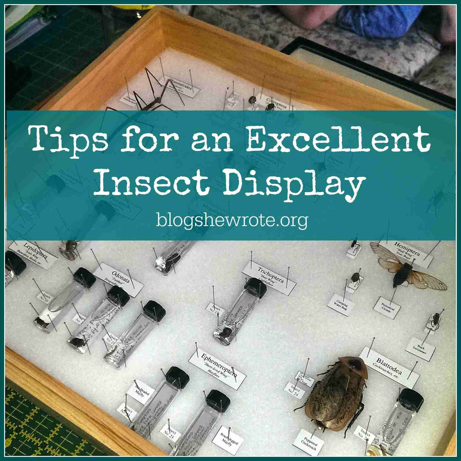 Blog, She Wrote: Tips for an Excellent Insect Display
