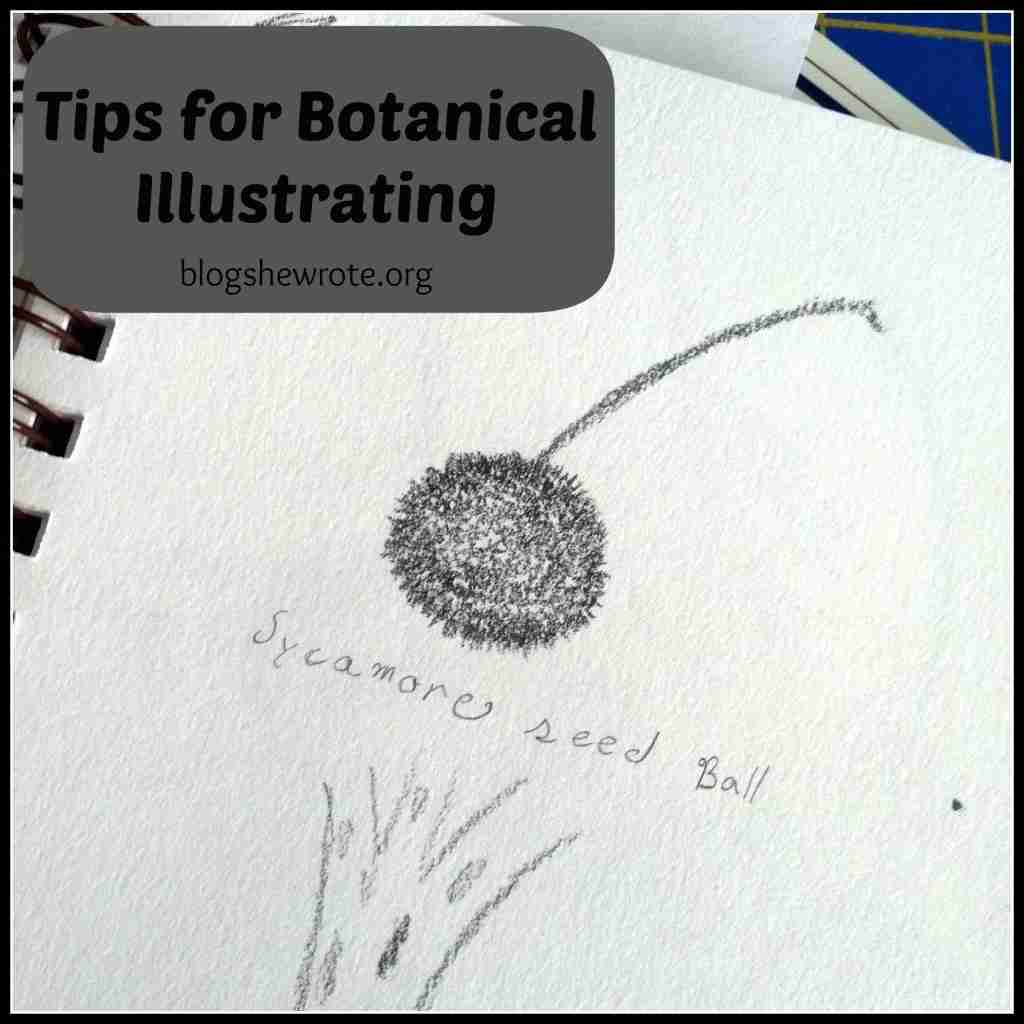 Tips for Botanical Illustrating
