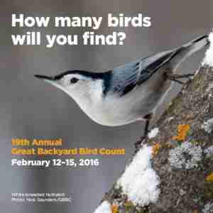 Science Quest: Collecting Bird Data