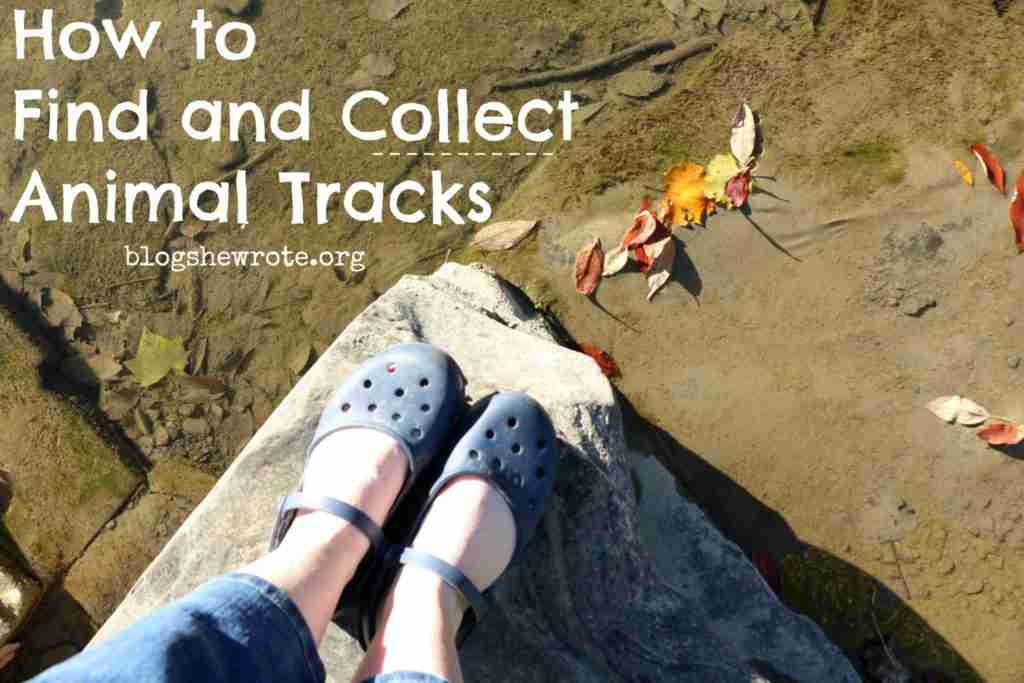 How to find and collect animal tracks
