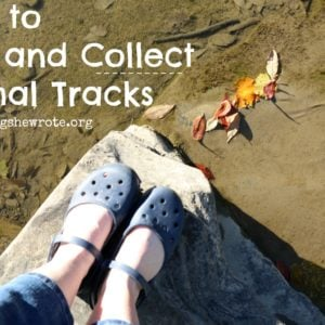 How to Find & Collect Animal Tracks