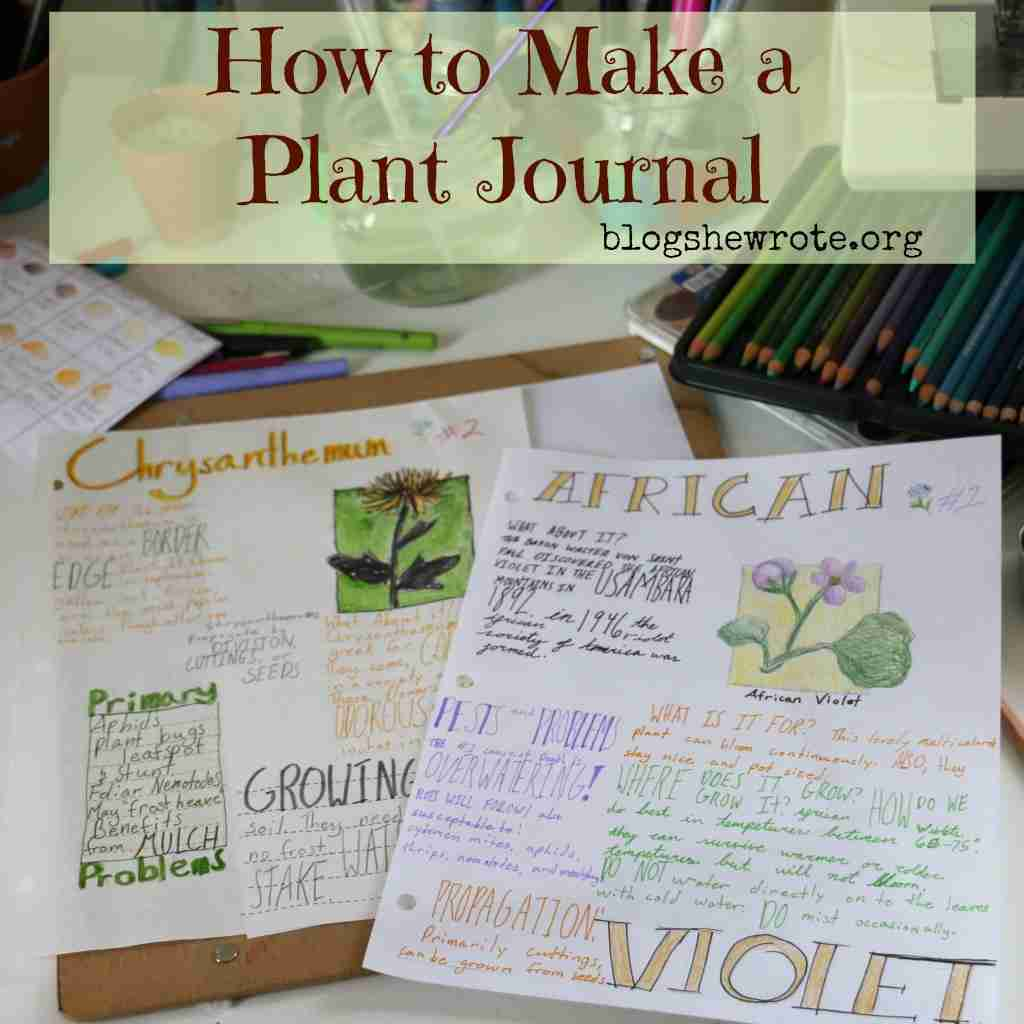 pages of a journal with colorful plant notes and drawings