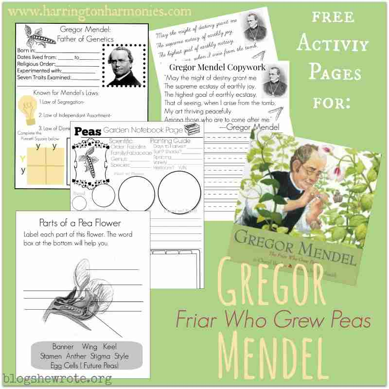 what gregor mendel growing peas can teach us about heredity blog she wrote. Black Bedroom Furniture Sets. Home Design Ideas