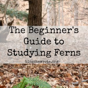 The Beginner's Guide to Studying Ferns