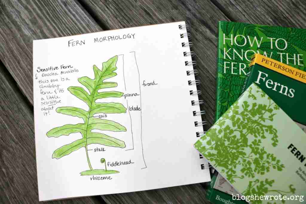 labeled fern
