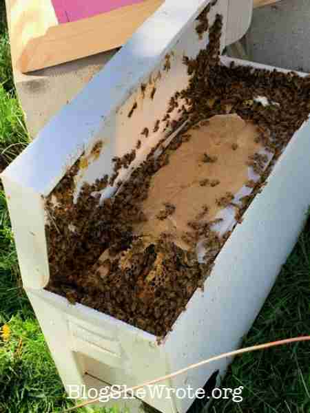 How a Project Based Approach Encourages Big Exploration- bee box with bees inside